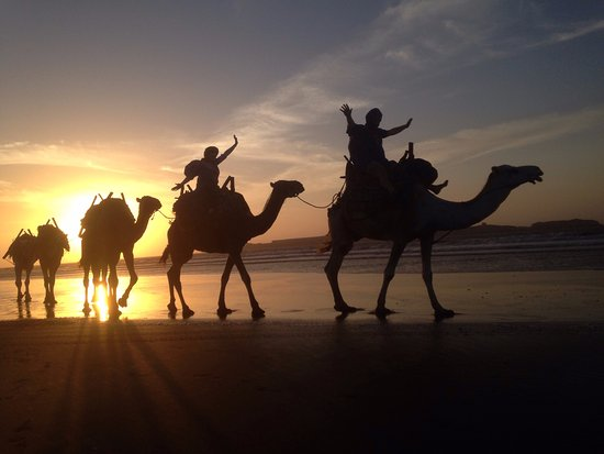 Riad Watier: Camel safari before sunset (as arranged by the hotel)