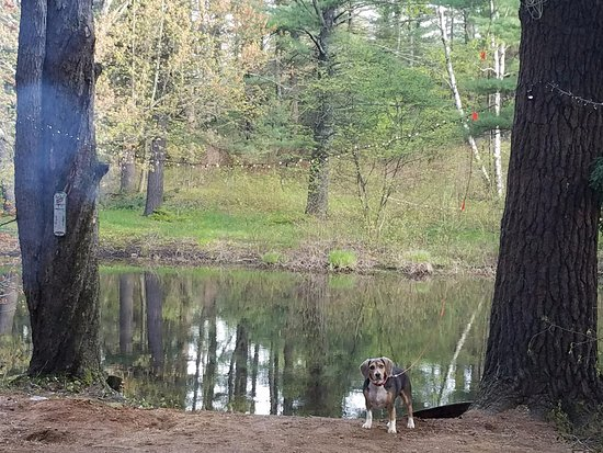 Raymond, NH: On the campsite, Casey looking innocent....Duck..what duck???