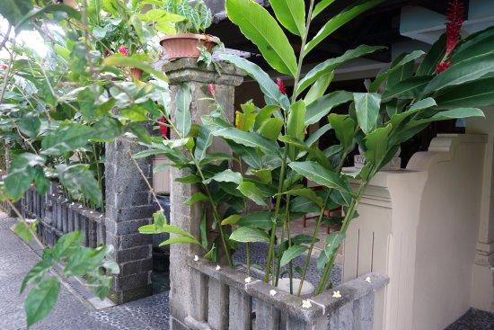 Hotel Puri Bambu: Vue extérieure sur la chambre
