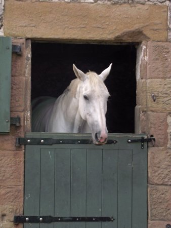 Alsop en le Dale, UK: One of the local residents
