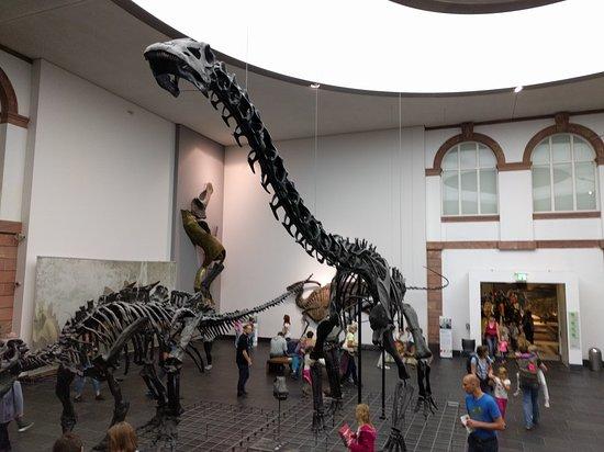 "Senckenberg Natural History Museum (Naturmuseum Senckenberg) : Einfach faszinierend das Museum. Erinnert an ""Nachts im Museum"""
