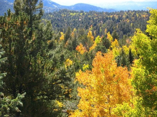 Divide, CO: Fall Colors