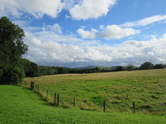Llanwrda, UK: View from the front of the house over our parkland