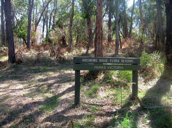 Croydon, Australia: hochkins Ridge Flora Reserve