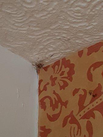 Unicorn Hotel: 1 spider hiding in it's web