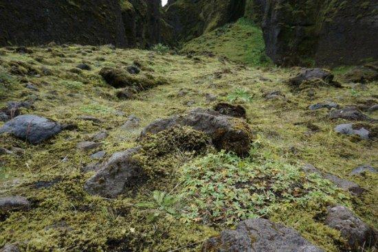 Kopavogur, Ισλανδία: photo3.jpg