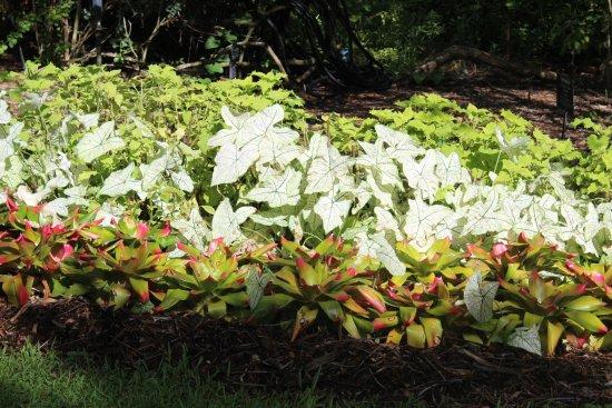 One Of Many Displays Picture Of Heathcote Botanical Gardens Fort Pierce Tripadvisor