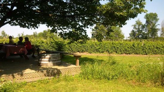 Milford, Canada: Patio overlooking vineyard
