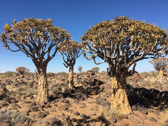 Keetmanshoop, Namibia: Kokerbomen