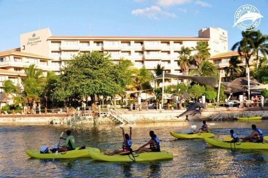 Dolphin Discovery Dreams Puerto Aventuras