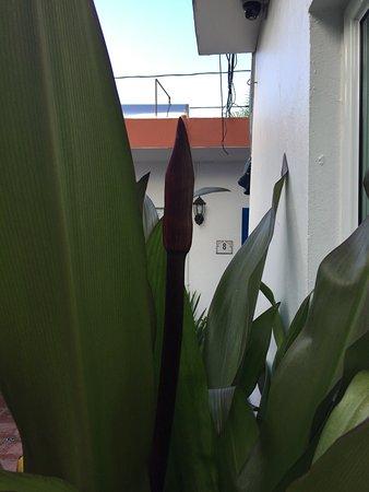 Tres Palmas Inn: Flora