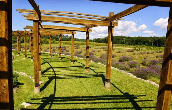 Lavender Labyrinth Picture Of Cherry Point Farm And Market Shelby Tripadvisor,White Kitchen Cupboards For Sale