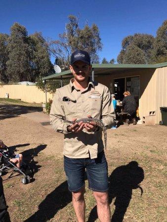 Gatton, Australien: Alligator holding