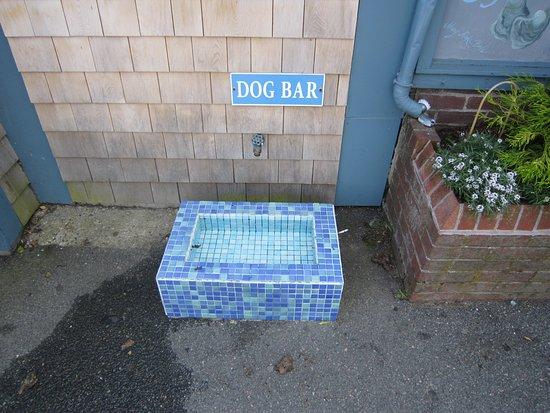 Chatham Squire Restaurant: Dog bar outside