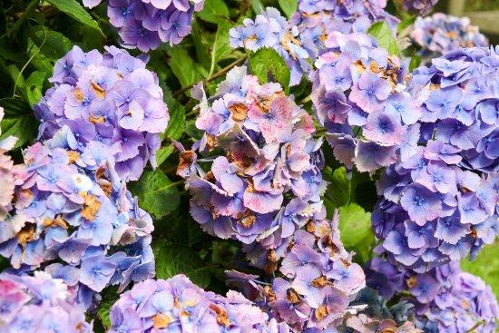 St Austell, UK: More pretty flowers