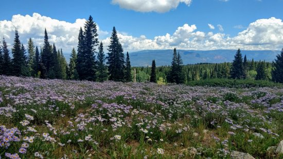 Thomas Lake Trail: Wildflowers were incredible when we were there end of July 2017.