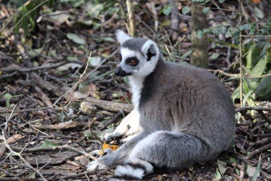 Monkeyland Primate Sanctuary: Descansando