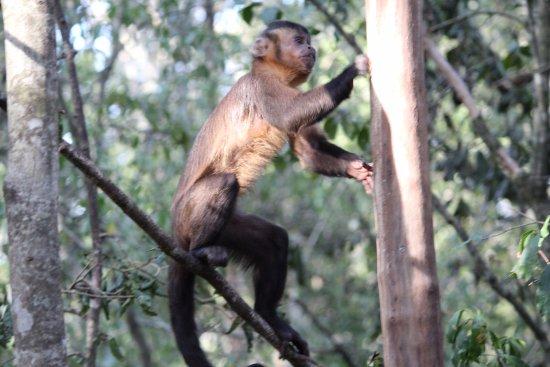 Monkeyland Primate Sanctuary: Listo a subir