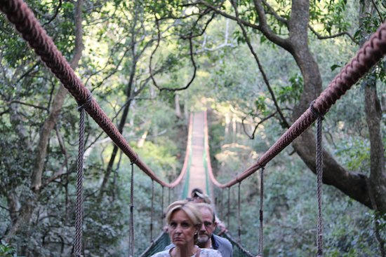 Monkeyland Primate Sanctuary: El puente a una buena altura