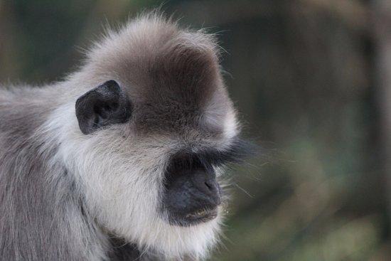 Monkeyland Primate Sanctuary: Muy tranquilo