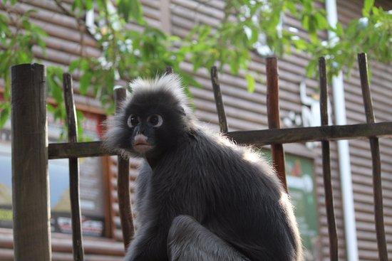 Monkeyland Primate Sanctuary: El ultimo que vimos, al salir