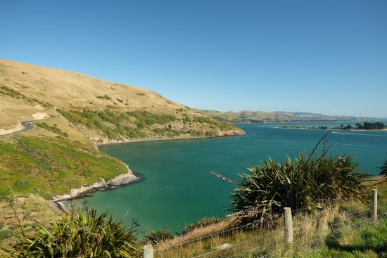 Otago Peninsula: photo1.jpg