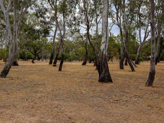 Pomonal, Australia: Unpowered Camping