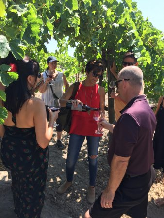 Paso Robles, Californië: Wine tasting outside on a vineyard tour