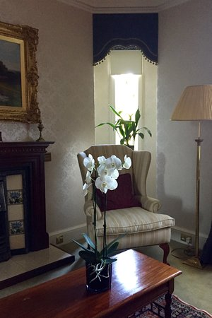 Ballantrae, UK: Exquisite white orchid in morning light.