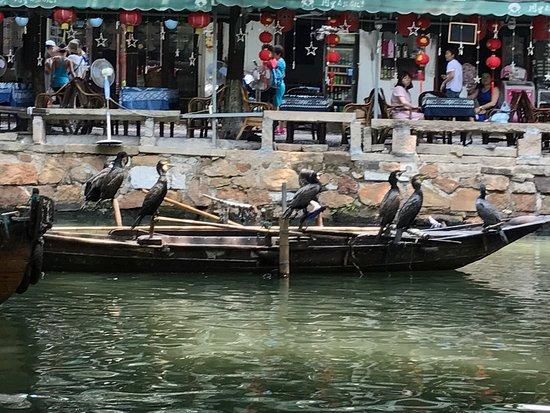 Tongli Town: photo0.jpg