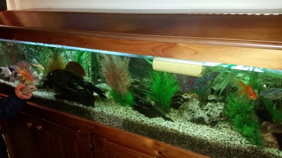 Narre Warren, Australia: Aquarium in restaurant