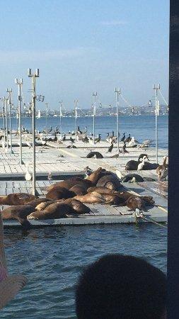 San Diego Seal Tours: photo0.jpg