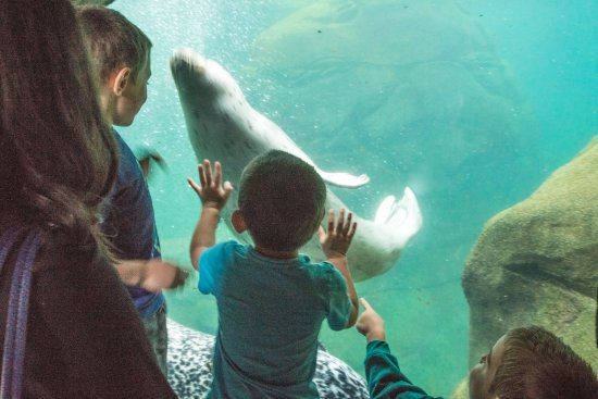 Oregon Coast Aquarium: Seal exhibit was a favorite for the Grandkids