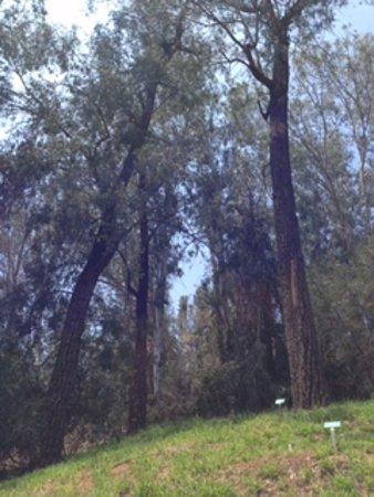 Riverside, CA: Tall Trees