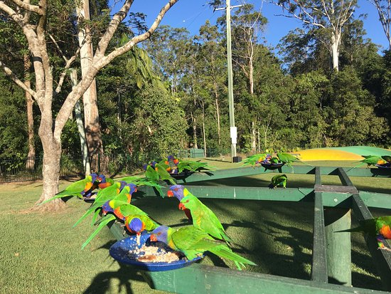 Forest Glen, Australia: photo7.jpg