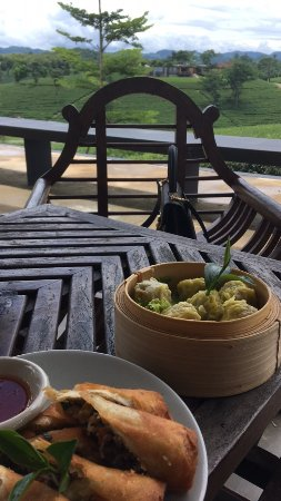 Choui Fong Tea Plantation: photo0.jpg