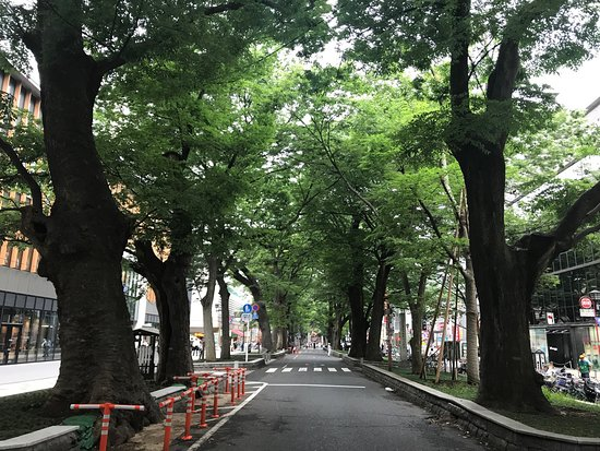 The road lined with Japanese Zelkova near Babadaimon Gate