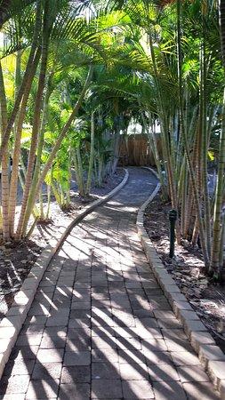 Island Palms Resort: Walk way to reception