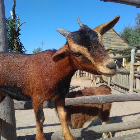 Зоопарк Сафари: IMG_20170810_201334_157_large.jpg