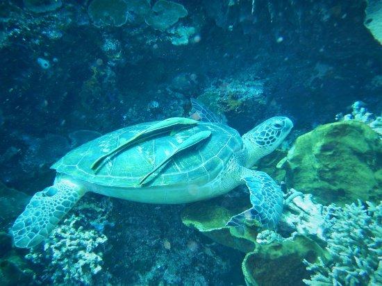 Froggies Divers Bunaken Photo