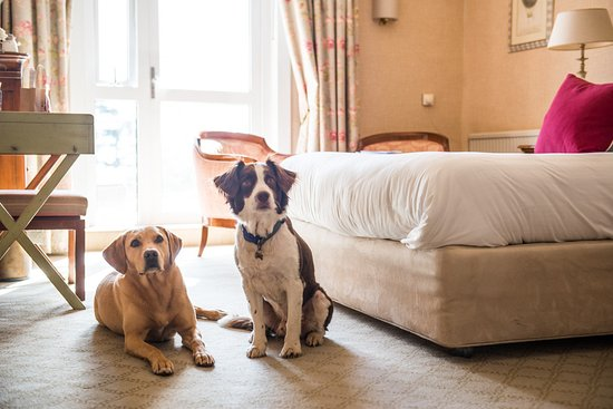 Thurlestone, UK : Dog friendly room