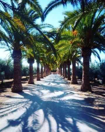 Moncarapacho, Portugal: Definitely worth visiting!