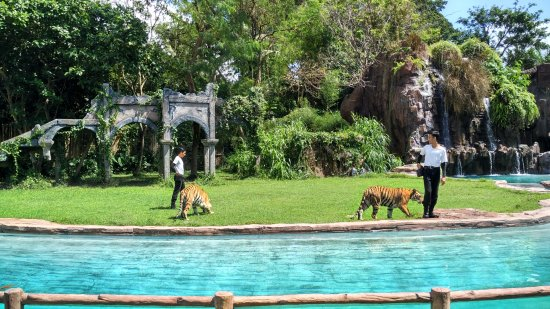 Bali Safari & Marine Park: Atraksi harimau