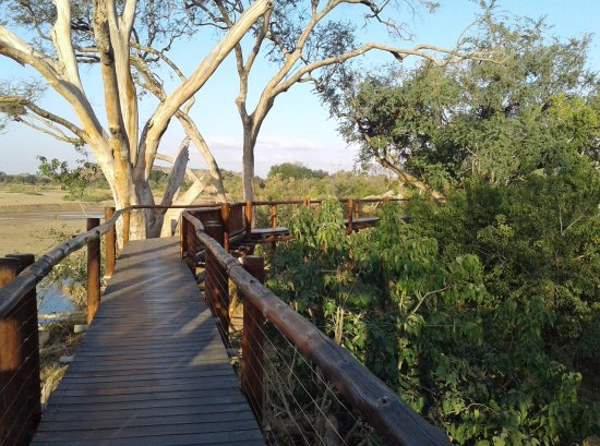 Mapungubwe National Park, Sør-Afrika: tree board walk on the banks of the Limpopo