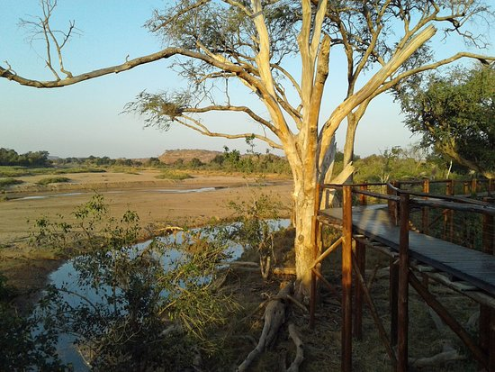Mapungubwe National Park, Afrika Selatan: Limpopo river and the tree board walk, great for bird watching