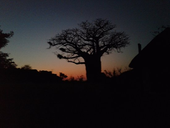 Mapungubwe National Park Photo