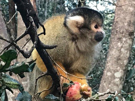 Monkeyland Primate Sanctuary: photo2.jpg