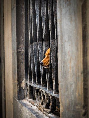 Barcelona Photowalk: Cute orange dog - smelling the bypassers