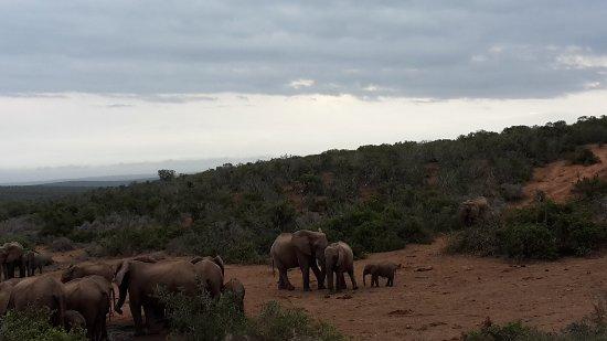 im Addo Elephantpark
