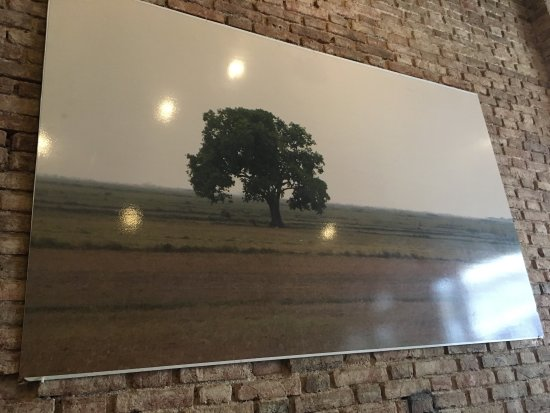 The Lonely Tree Cafe: photo1.jpg